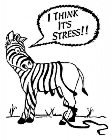 Eating for Stress Management